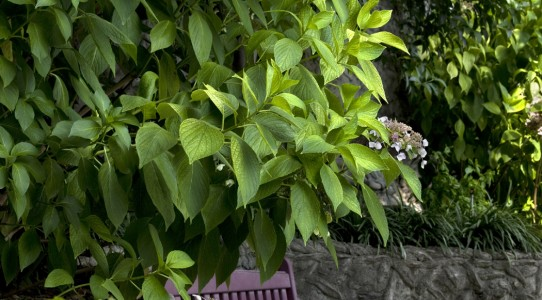 Serra con cucina in giardino_11