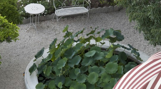 Serra con cucina in giardino_03